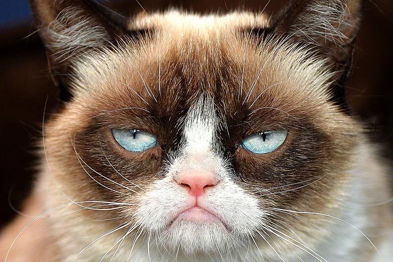 Wobbly Week 3 – Grumpy