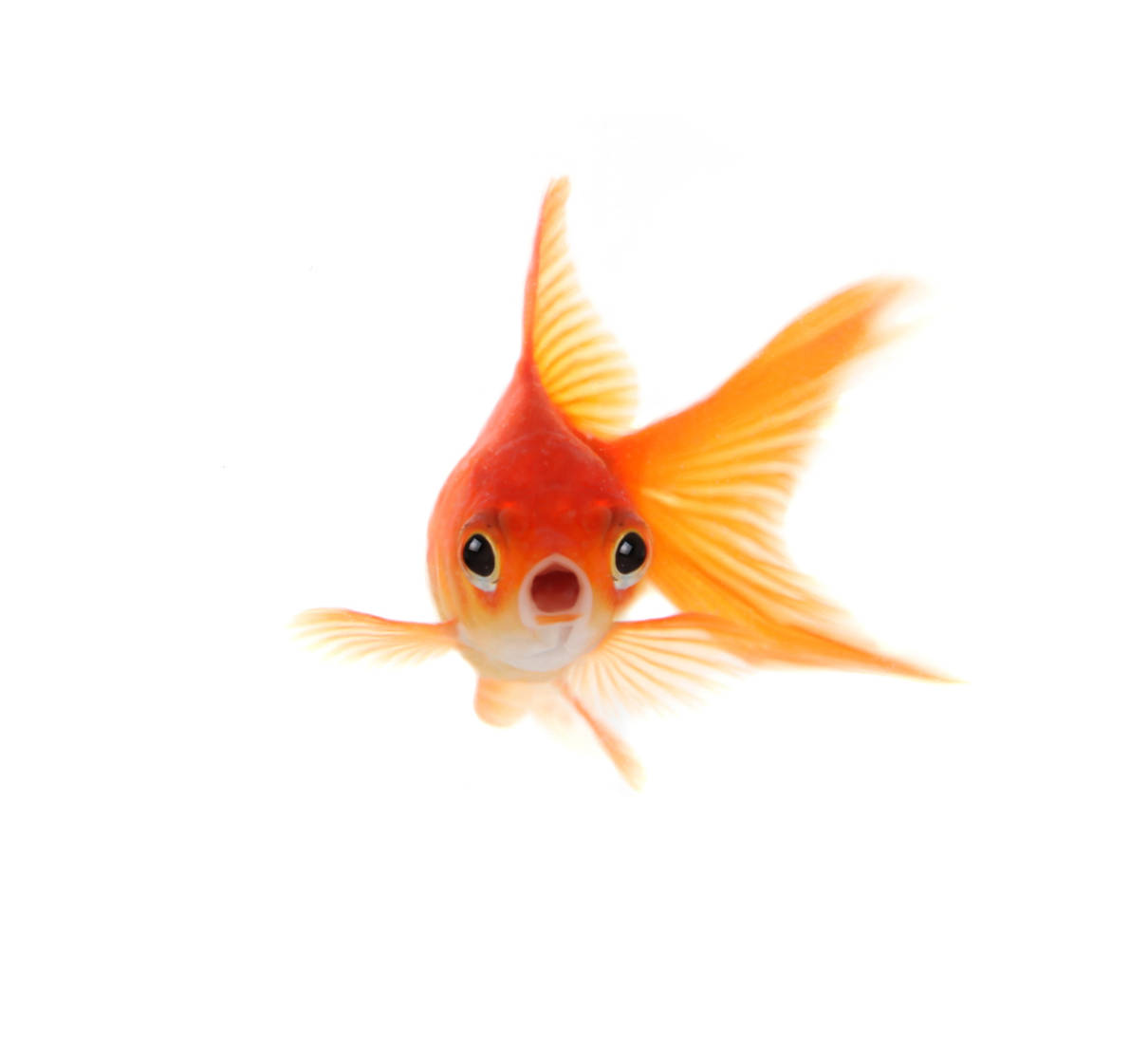 Wobbly Week 31 – Like a goldfish